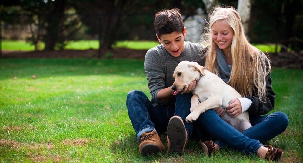 собаки пара фото причины