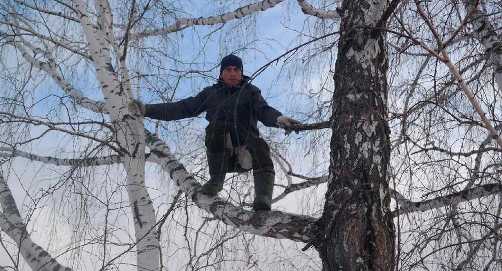 Прощай, берёза! Ловивший интернет на дереве студент добился установки вышки