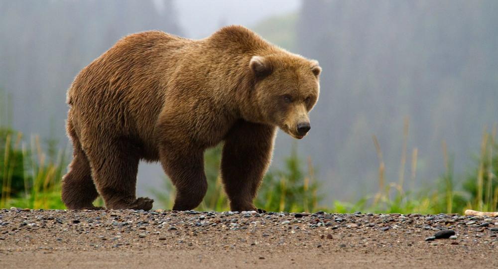 В сахалинском селе медведь вышел к школе