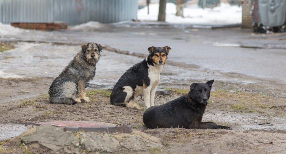 В Башкирии стая бродячих собак загнала детей на дерево